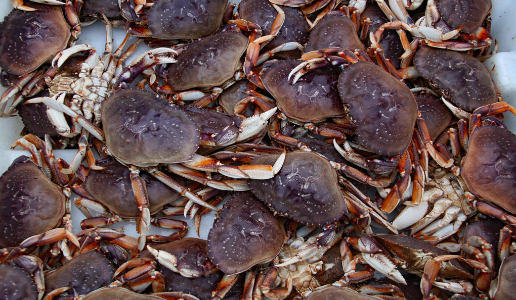 Oregon Heritage Deviled Crab Recipe